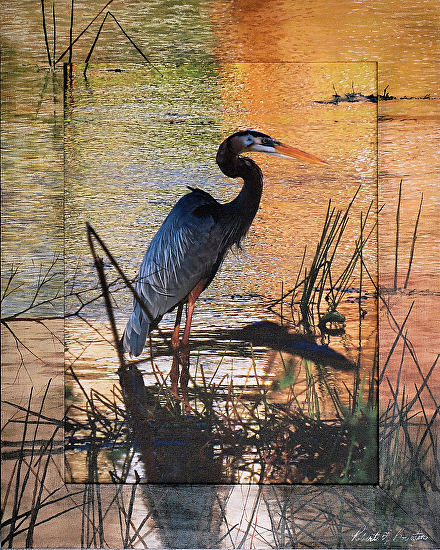 Blue Heron - Photography/Painting