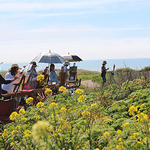 Monterey Bay Plein Air Painters Association - Member Instructor Workshop - SAMPLE ONLY - Feature�Coming!