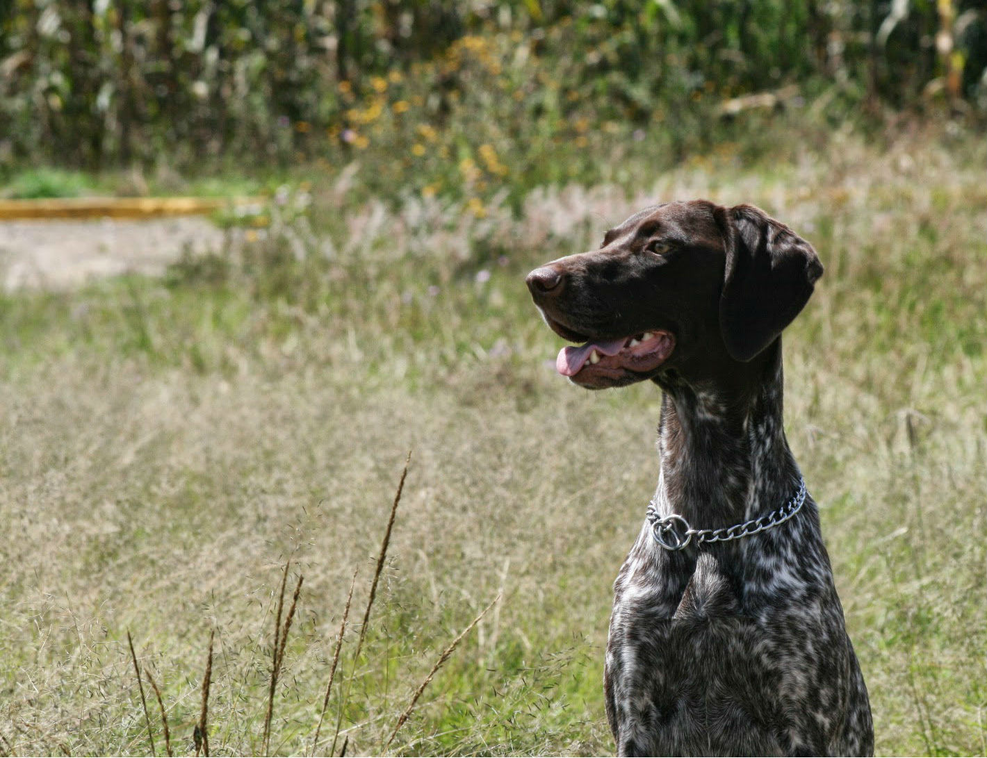 Ricardo's German Pointer, Java