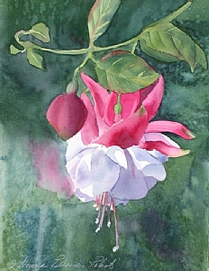 Fuschia by a Rainy Window by Donna Barnes-Roberts Watercolor ~ 15 x 11