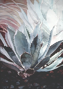 Blue Agave by Donna Barnes-Roberts Watercolor ~ 30 x 22