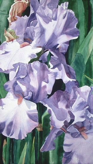 Iris Trio by Donna Barnes-Roberts Watercolor ~ 48 x 24