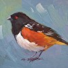 309 - Spotted Towhee