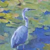 310 - Great Blue Heron