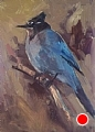 225 - Steller's Jay by Adele Earnshaw Oil ~ 7 x 5