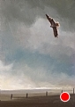 226 - Red-tailed Hawk in Flight by Adele Earnshaw Oil ~ 7 x 5