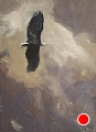 229 - Bald Eagle in Flight by Adele Earnshaw Oil ~ 7 x 5