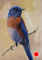 234 - Western Bluebird by Adele Earnshaw Oil ~ 7 x 5