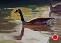 238 - Canada Goose by Adele Earnshaw Oil ~ 5 x 7