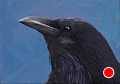 243 - Raven by Adele Earnshaw Oil ~ 5 x 7