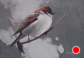 143 - Sparrow by Adele Earnshaw Oil ~ 5 x 7