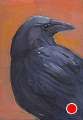 142 - Raven by Adele Earnshaw Oil ~ 7 x 5