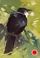 75 - 256 Tui (2) by Adele Earnshaw Oil ~ 7 x 5