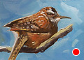 258 - cactus wren by Adele Earnshaw Oil ~ 5 x 7