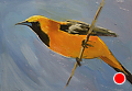 75 - 262 Oriole by Adele Earnshaw Oil ~ 5 x 7