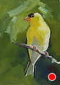 75 - 264 American Goldfinch by Adele Earnshaw Oil ~ 7 x 5