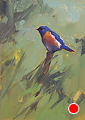 75 - 267 Bluebird_edited-1 by Adele Earnshaw Oil ~ 7 x 5
