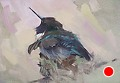 75 - 270 Black-chinned Hummingbird by Adele Earnshaw Oil ~ 5 x 7