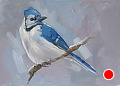 75 - 278 Jay by Adele Earnshaw Oil ~ 5 x 7