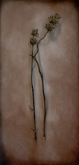 "Prairie Flower by Christen Humphries Watercolor and Oil ~ 14"" x 7"""