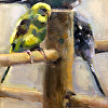 Pairs of Parakeets