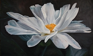 "Single Bloom Peony by Sally Tharp Oil ~ 36"" x 60"""