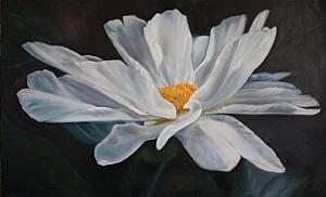 "Single Bloom Peony by Sally Tharp Oil ~ 36"" x 60"""