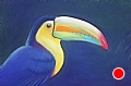 Costa Rica Toucan by dan vaughan Pastel ~ 18 x 24