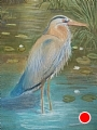Blue Heron by dan vaughan Pastel ~ 24 x 18