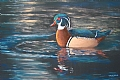Wood Duck by dan vaughan Pastel ~ 18 x 24