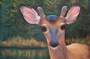 Yearling by dan vaughan Pastel ~ 18 x 18