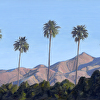 Palm Springs Palms