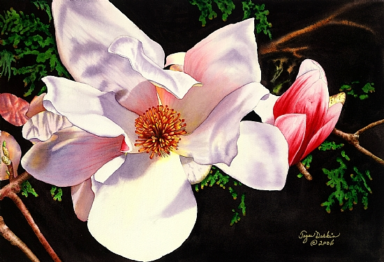 Magnolia - Watercolor