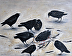 Crow Funeral by JoAnn Nava
