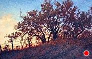 "Fenced Oaks 20x30 by Sara Winters Oil ~ 20"" x 30"""
