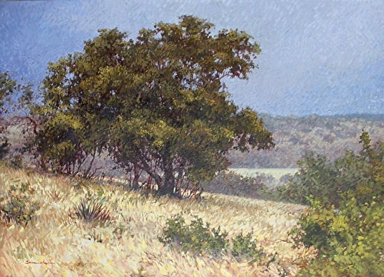 Near Sisterdale - Oil