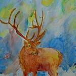 Cathy Jones - Where Are The Elk