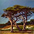 Cypress Pebble Beach by Galerie Plein Aire