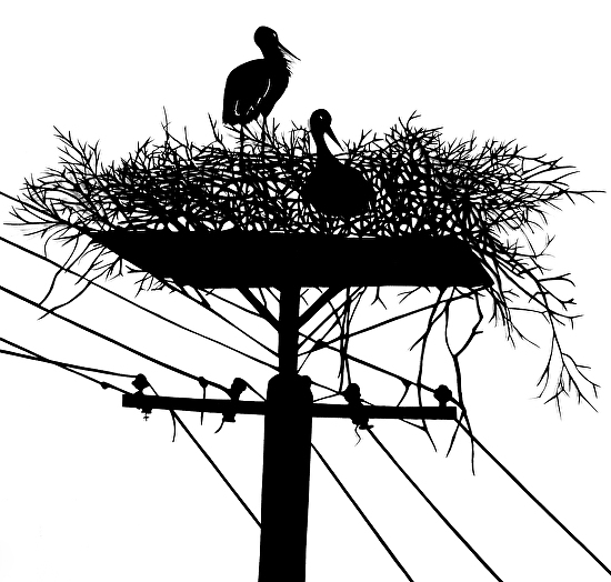 Stork Family with Telephone - Silhouette (Paper&Scissors)