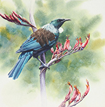 Tui, Parson's Bird by Joe Garcia Watercolor ~ 11 x 11