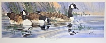 Summer Morning Splendor, Canada Geese by Joe Garcia Watercolor ~ 10 x 28