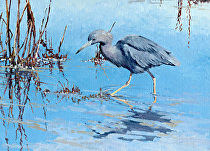 Little Blue, Heron by Joe Garcia Oil ~ 11 x 14