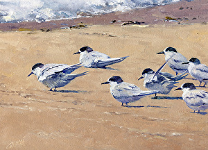 Birds in Oil