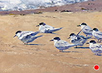 Taking Terns by Joe Garcia Oil ~ 9 x 12