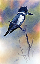 Kingfisher by Joe Garcia Watercolor ~ 10.5 x 6.5