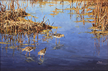 Grazing, Lesser Yellow-legs by Joe Garcia Oil ~ 14 x 21
