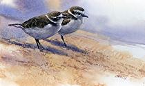 sanderlings by Joe Garcia Watercolor ~ 6.25 x 10.25