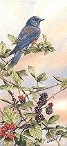 Black & Blue by Joe Garcia Watercolor ~ 14.5 x 7