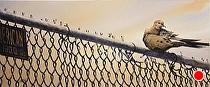 American Fence Co by Joe Garcia Watercolor ~ 10 x 24