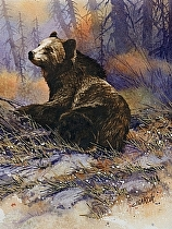 Grizzly by Joe Garcia Watercolor ~ 11 x 11